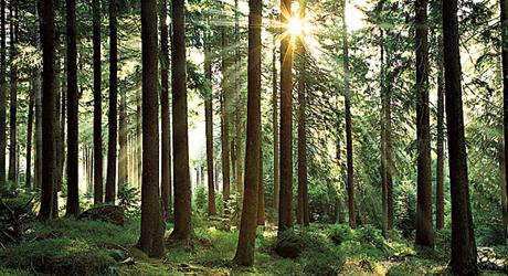 skog_web