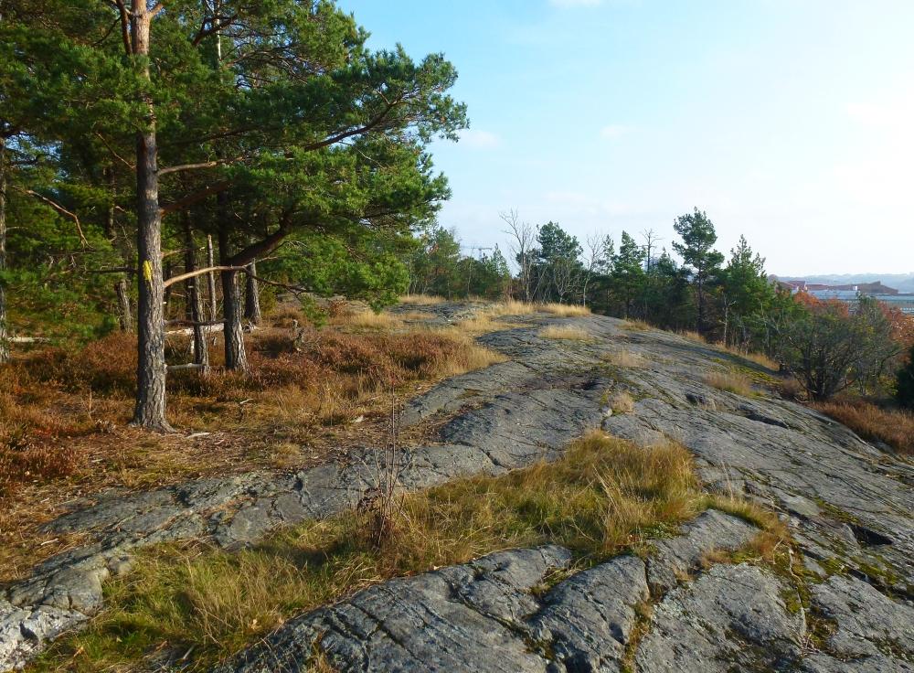 Solbergaskogen_2015d