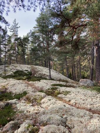 Terrängbild Törnskogen